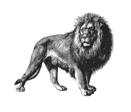 lion-full-body